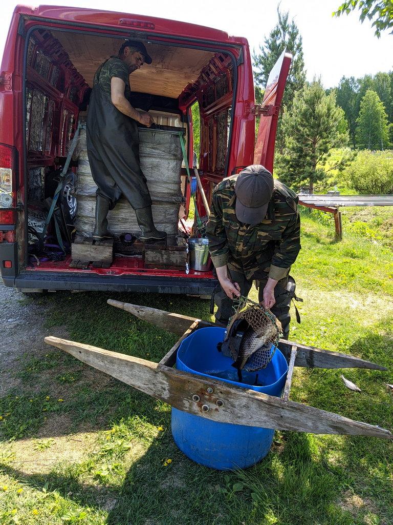 Зарыбление Шабровского пруда основной и вип, новые поставки рыбы каждую неделю