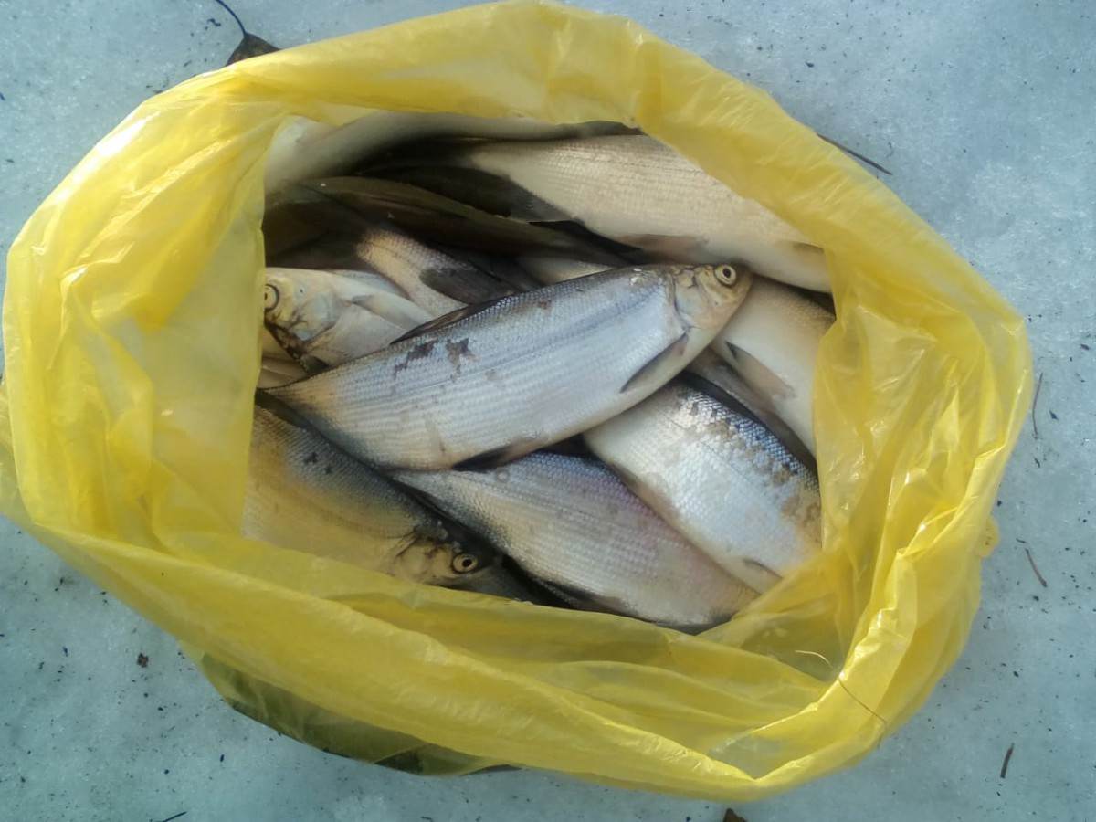 Зимняя рыбалка в Свердловской области на Шабровском прудуШабровский пруд – Платная Рыбалка в Екатеринбурге
