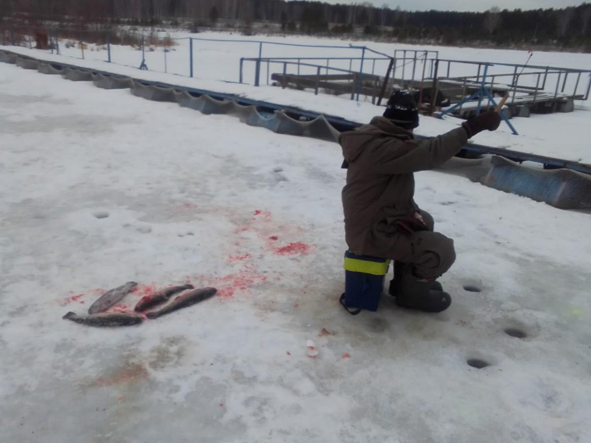 платная рыбалка в екатеринбурге и свердловской области