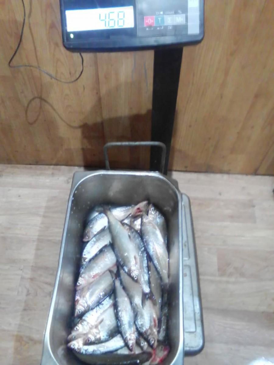Рыбалка в Свердловской области на Шабровском прудуШабровский пруд – Платная Рыбалка в ЕкатеринбургеРыбалка на Сига Свердловская область