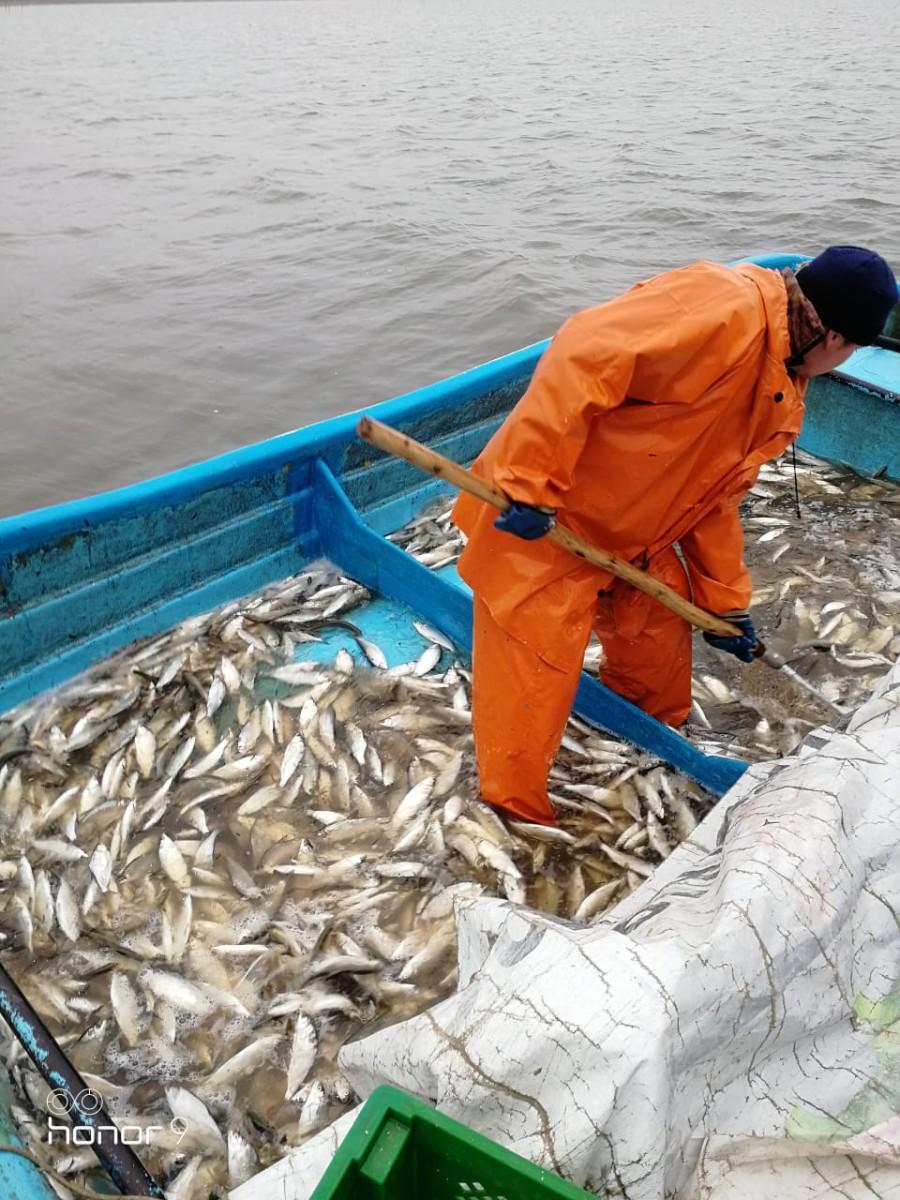 Рыбалка на Сига ЕкатеринбургЗарыбление водоёмаПлатная рыбалка ЕкатеринбургШабровский пруд