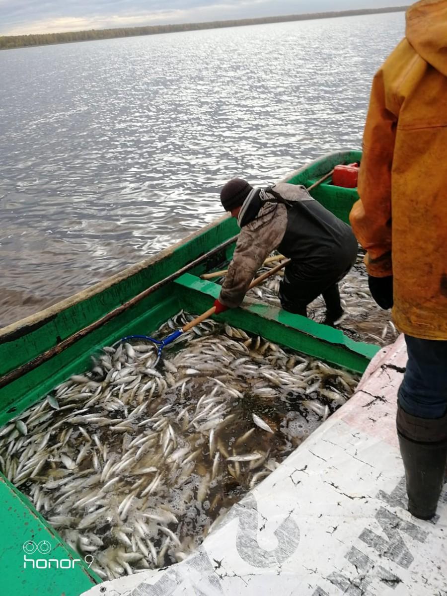 Зимняя рыбалка свердловская областьРыбалка на сига ЕкатеринбургРыбалка зимняя Шабровский прудЗарыбление водоёма Шабровский пруд
