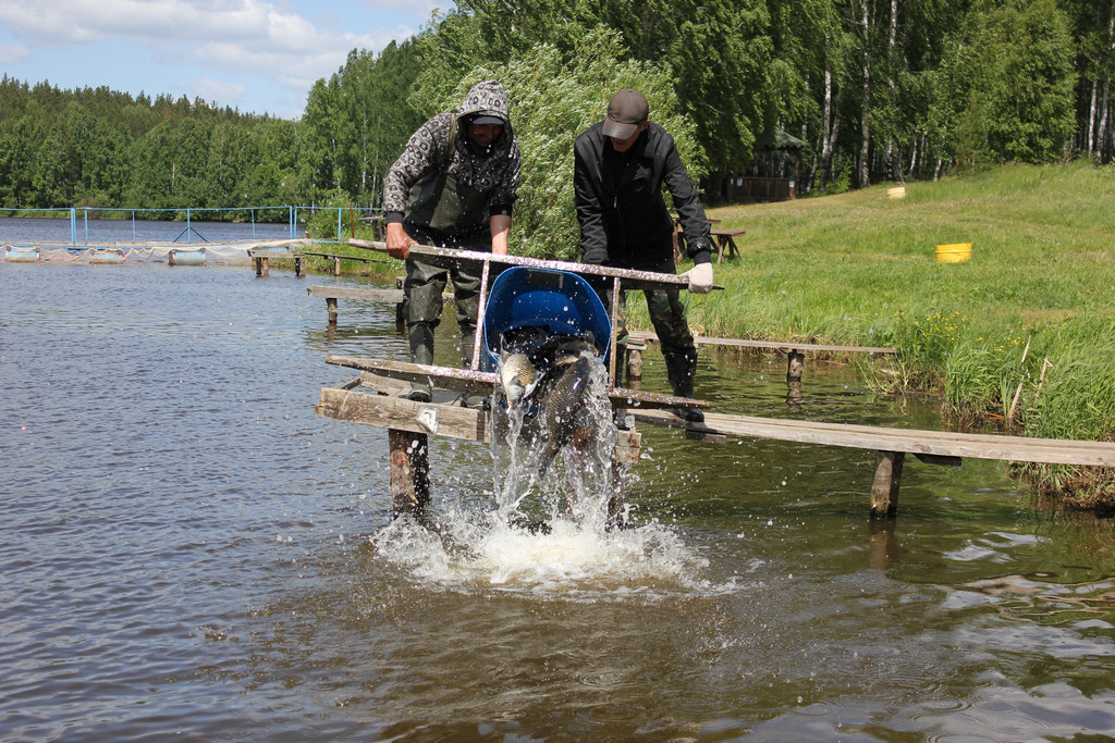 Шабровский пруд платная рыбалка в Екатеринбурге