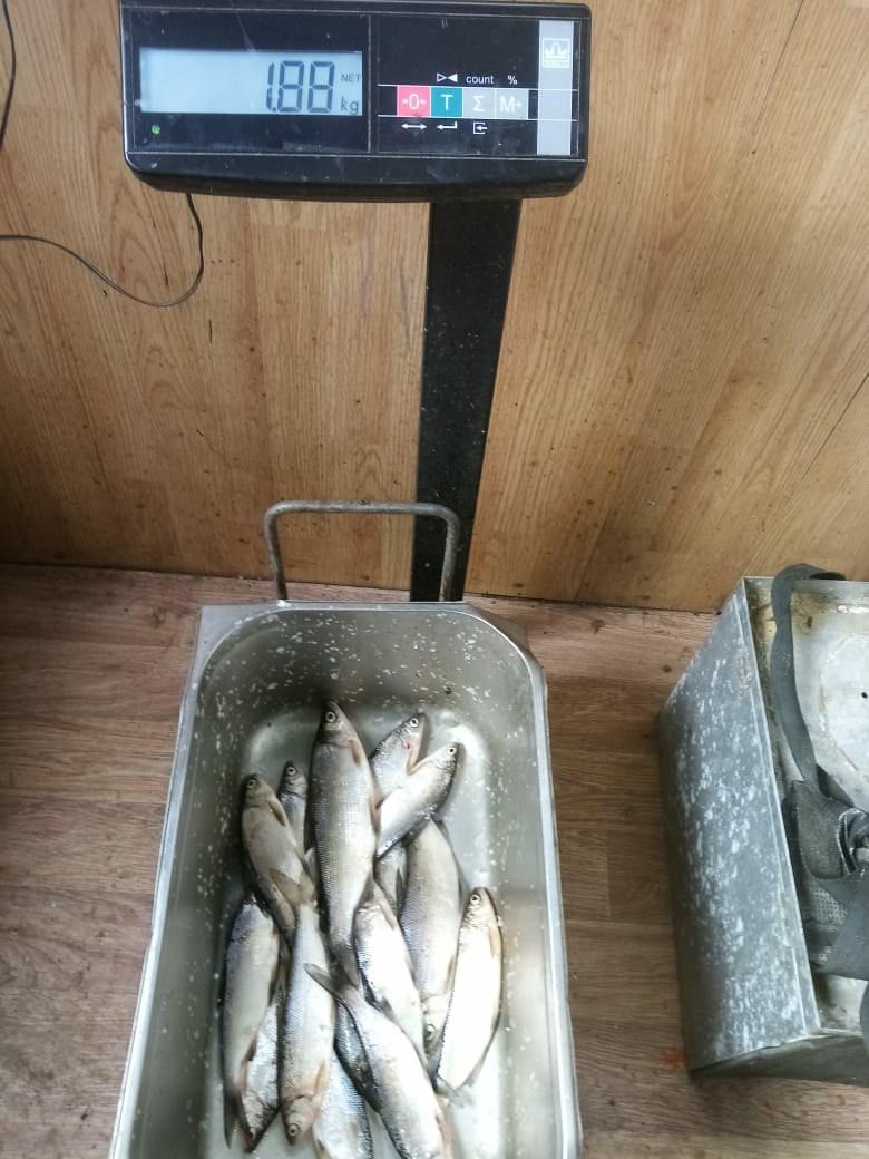 Платная Рыбалка в Свердловской области Екатеринбург на Шабровском пруду