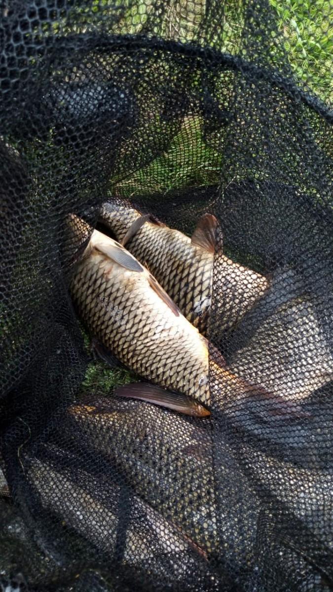 Рыбалка на карпа, щуку Шабровский пруд Екатеринбург