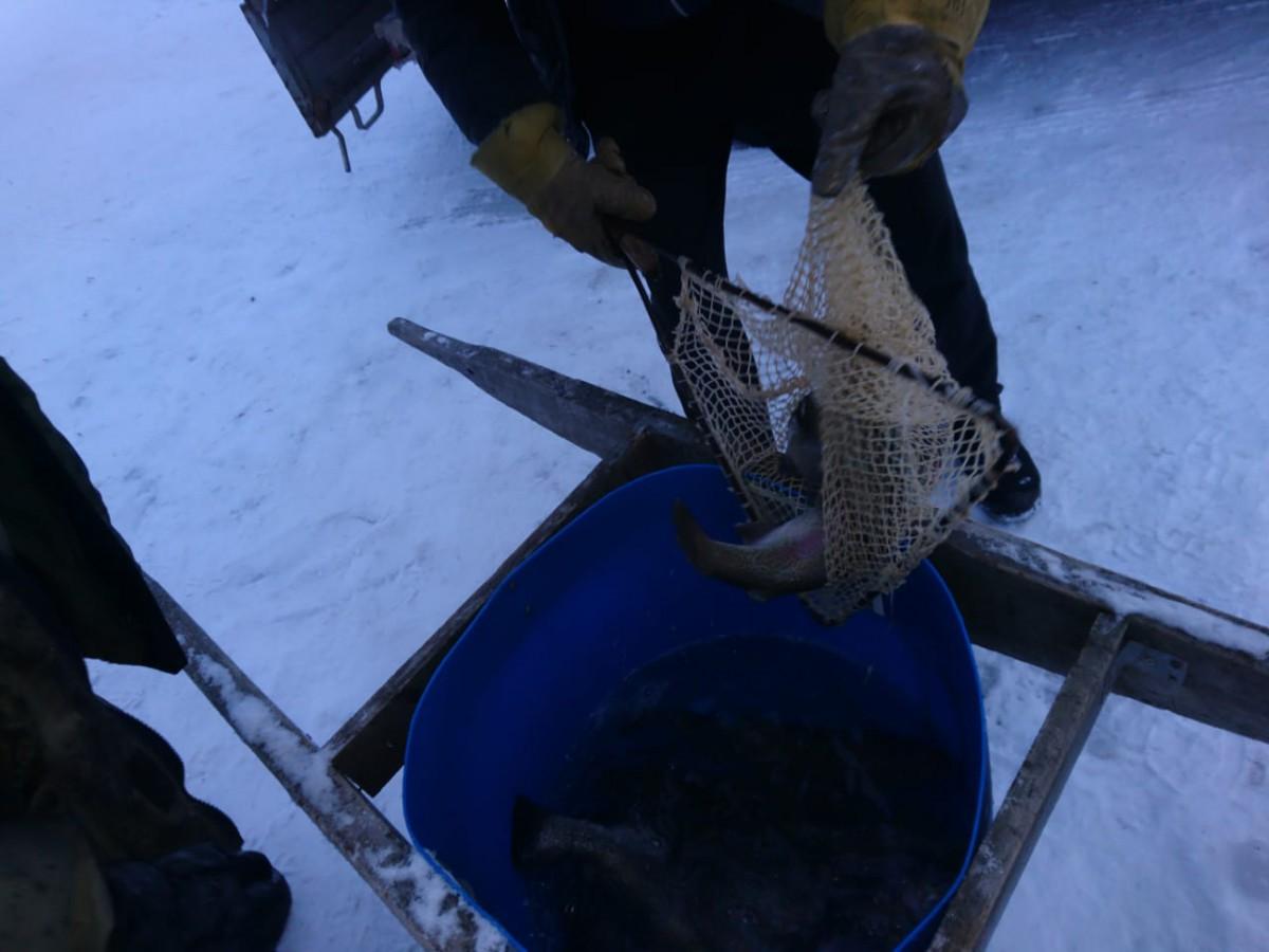 зимняя рыбалка форель платник екатеринбург