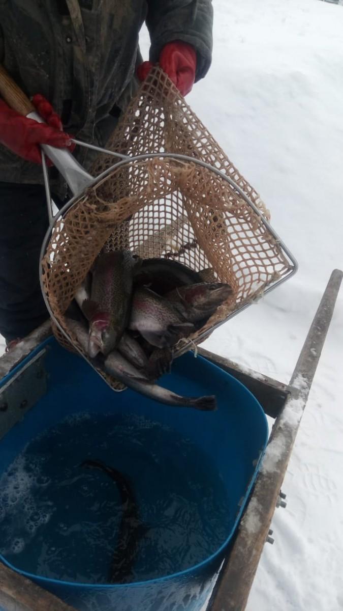 Зарыбление Форель Зимняя рыбалка в Свердловской области на Шабровском прудуШабровский пруд – Платная Рыбалка в Екатеринбурге
